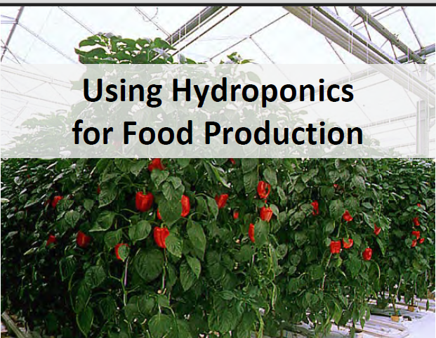 Guide to Hydroponic Gardening