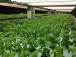 An Indoor Farm Goes Mega