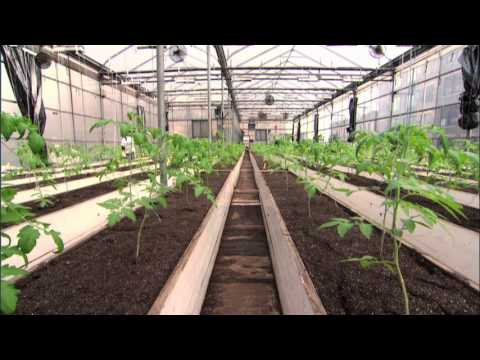 Growing Vegetables on a Grocery Store