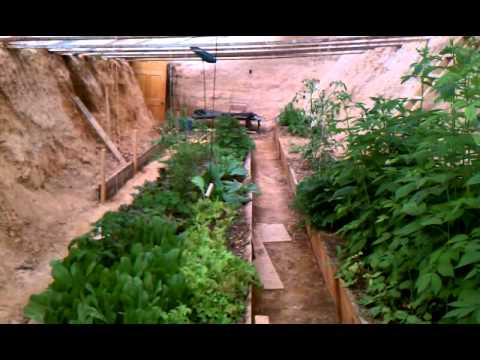Underground Greenhouse Walipini year two