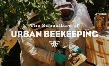 Urban Beekeeping in Los Angeles