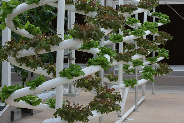 Hydroponic growing systems for the novice